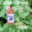 umpan-oplosan-galatama-rs-01